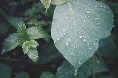 2018年沖縄県梅雨入り時期